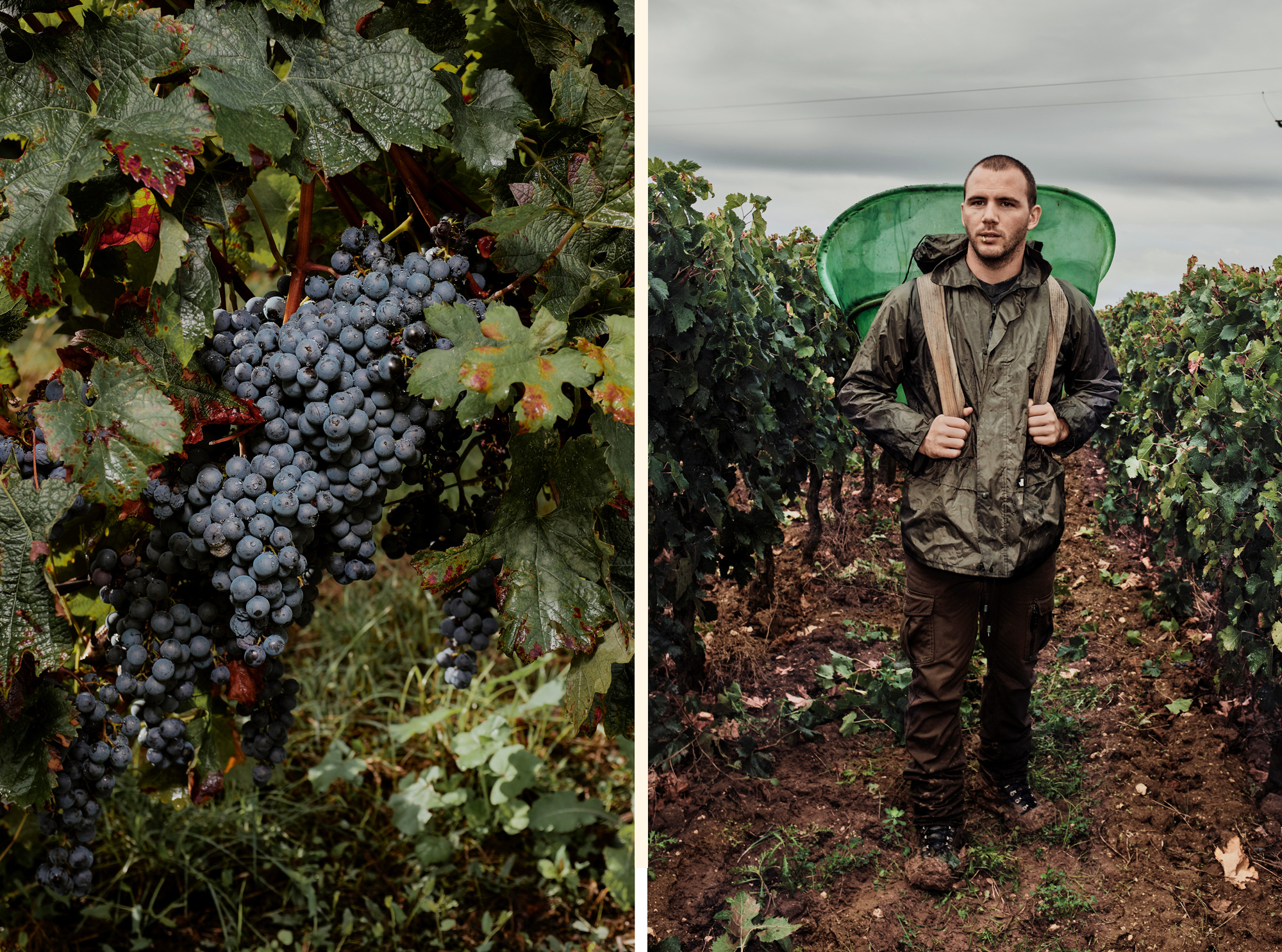 Daniel Lober Harvests for Bordeaux Wines